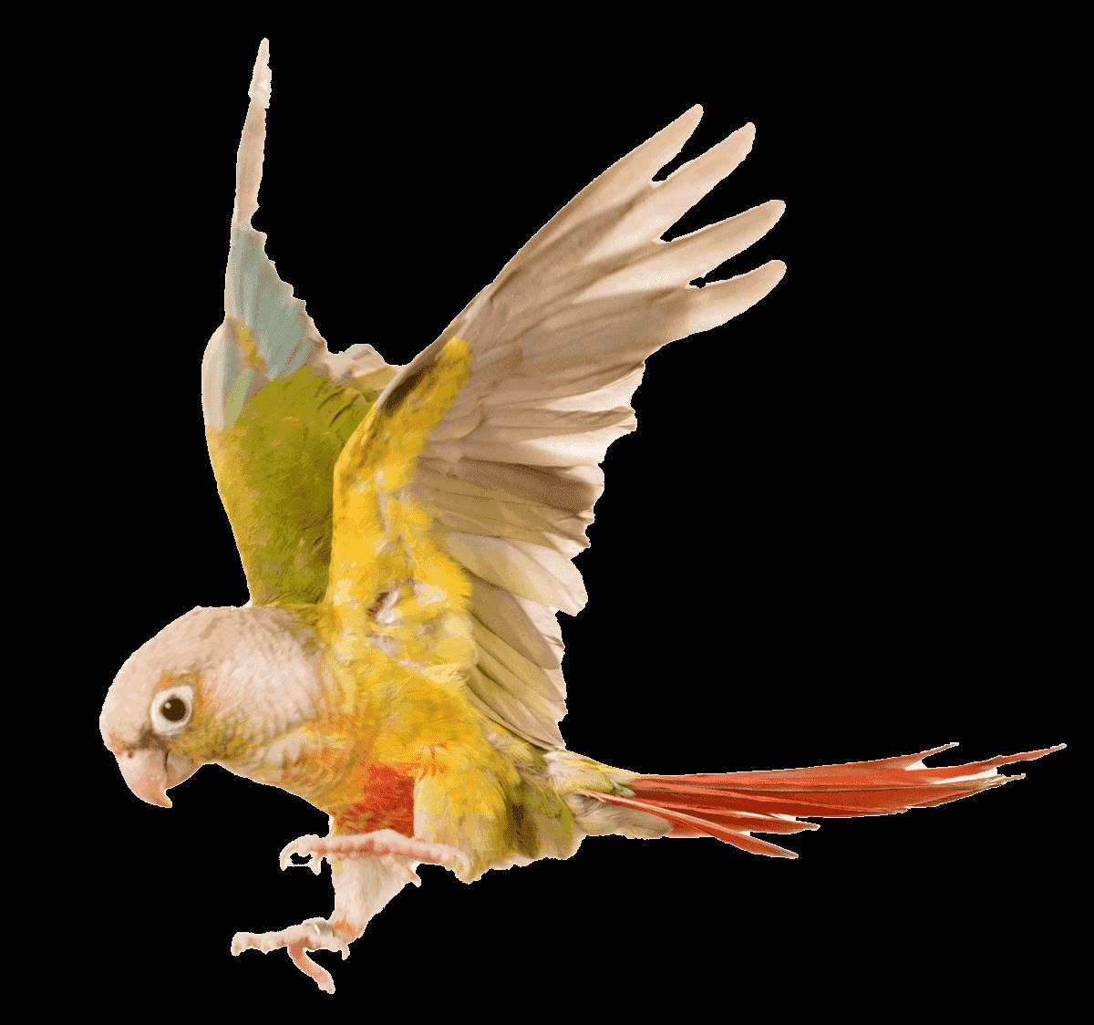 birdResampled